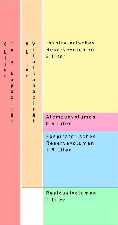Lungenvolumen